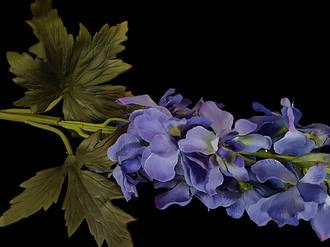 Delphinium – Dark Blue Stem