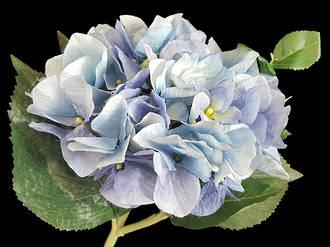 Hydrangea – Light Blue
