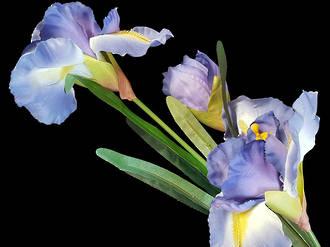 Iris – Bearded Iris Stem - Artificial