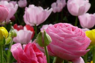 June Gardening Handbook - Download