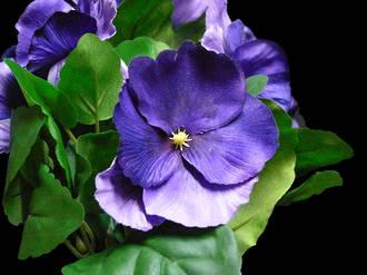 Pansy Bush - Violet/Lavender