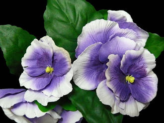Pansy Bush - White/Purple