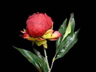 Peony Bud - Charming Red