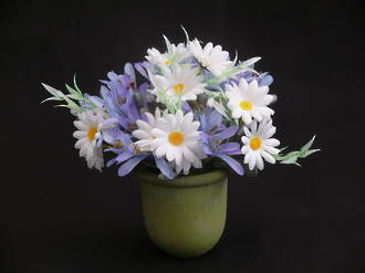 Potted Agapanthus & Daisy Blooms