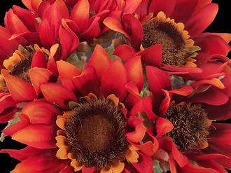 Sunflower - Red Orange Bunch