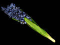 Hyacinth - Dark Blue - Artificial Stem
