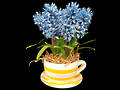 Hyacinth - Light Blue - Artificial Stem