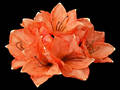 Amaryllis Bunch – Light Orange