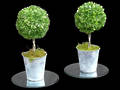 Boxwood Topiary Plants - Artificial
