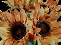 Sunflower - Yellow Orange Bunch