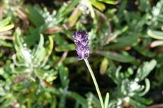 herbs 02a-230x153