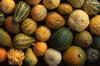 Gourds 014-100x66