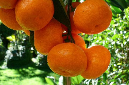 manderine 02-550x365