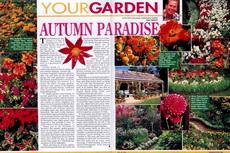 autumn paradise-230x153
