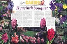 hyacinth bouquet-230x153