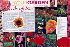 seeds of love-230x153