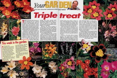 triple treat-230x153