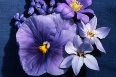 blue garden034b-230x153