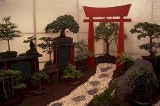 bonsai 019a-230x153