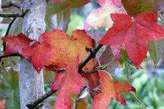 autumn 06-230x153