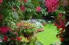 quarter-acre-paradise 001-100x66