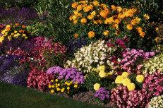 Autumn Gardens 001-231x153