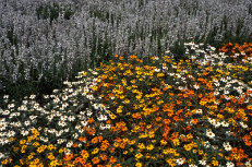 Autumn Gardens 005-231x153