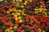 Autumn Gardens 020-100x66