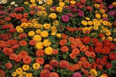Autumn Gardens 020-231x153