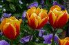 Winter-Spring-Annuals 01-100x66