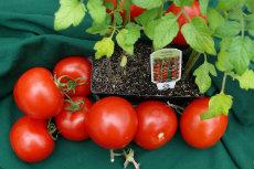 Tomatoes 01-230x153