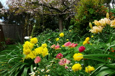 Flower Gardens 04-230x153