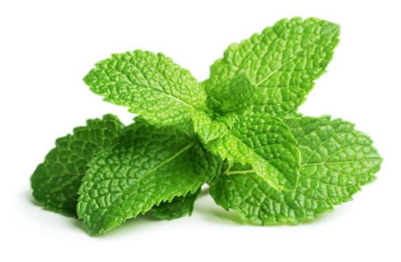 Mint 50g - AL FAKHER Shisha tobacco