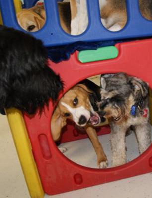 a-dog-daycare