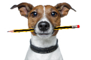 dog-with-pencil-58-548