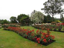 Joan Williamson Rose Gardens