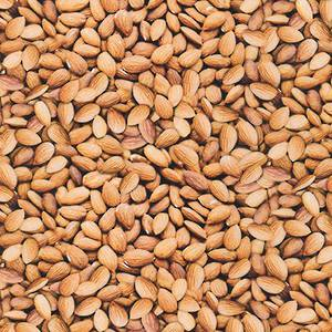RKSRKD-18917-236 TOASTED ALMOND