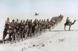 Australian Camel Company