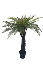 Potted Punga Fern 123cm