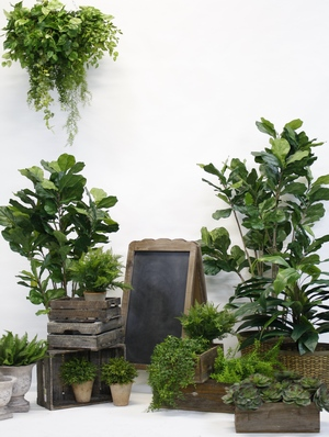 Greenery display
