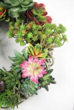 Succulent-31