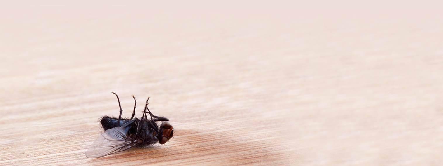 Commercial Pest Control Auckland