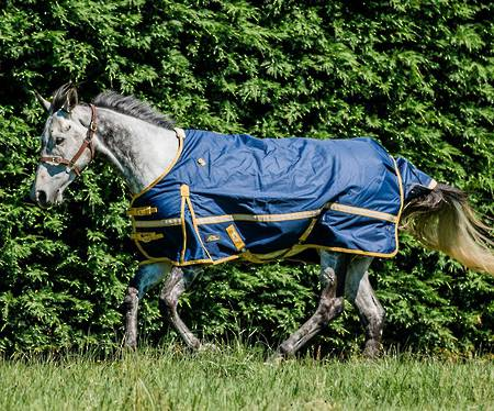 Cavallino Northampton Turnout Rug - No Fill