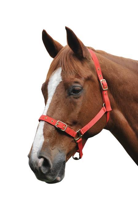 Saxon Nylon Brass Buckle Halter - Foal