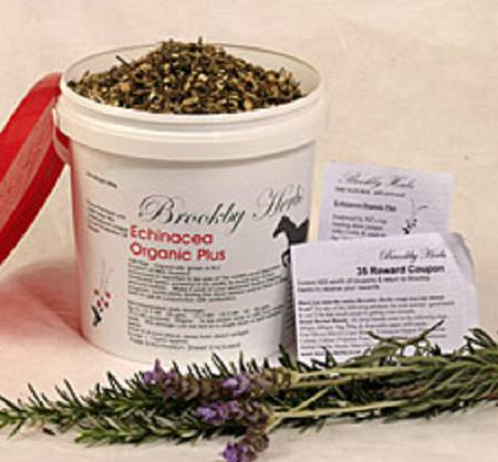 Brookby Herbs Echinacea Organic Plus