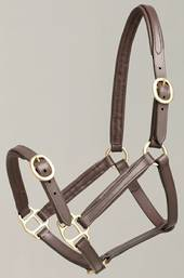 Aintree Foal Leather Halter