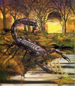 scorpio 1