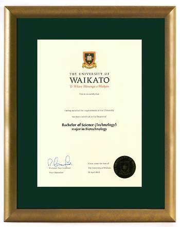 Waikato Degree Gold Frame 8447 CONSERVATION