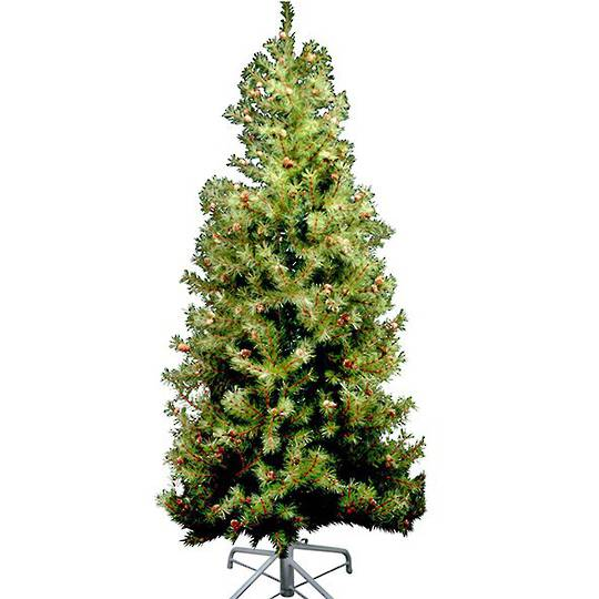 Fir Tree with Cones Tree 2mtr