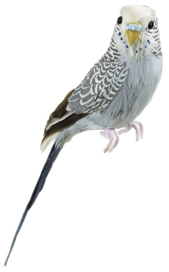 Budgerigar Grey 20cm